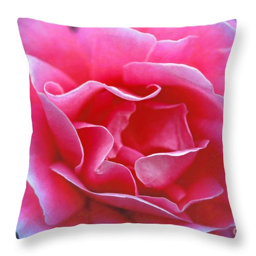 Peggy Lee Rose Throw Pillow featuring the photograph Peggy Lee Rose Bridal Pink by David Zanzinger