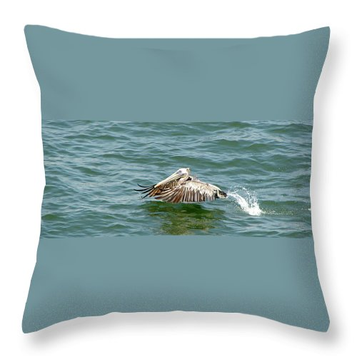 Pelecan Throw Pillow featuring the photograph Pelecan In Flight by Brett Winn