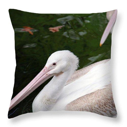 Pelican Throw Pillow featuring the photograph Pelican by Amanda Barcon