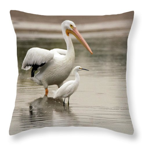 Pelican Throw Pillow featuring the photograph Pelican And Snowy Egret 6459-113017-1cr by Tam Ryan