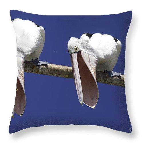 Pelican Throw Pillow featuring the photograph Pelican burp by Sheila Smart Fine Art Photography