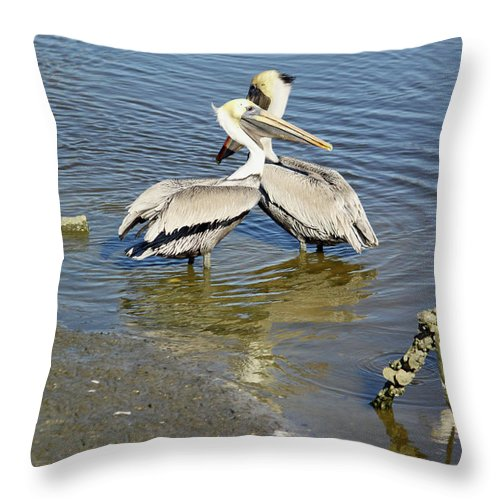 Pelican Throw Pillow featuring the photograph Pelican Love by Suzanne Gaff