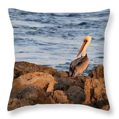 Pelican Throw Pillow featuring the photograph Pelican On The Rocks by Sabrina L Ryan