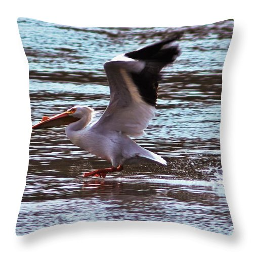 Peaceful Throw Pillow featuring the photograph Pelican Skimming The Rock River by Laura Birr Brown