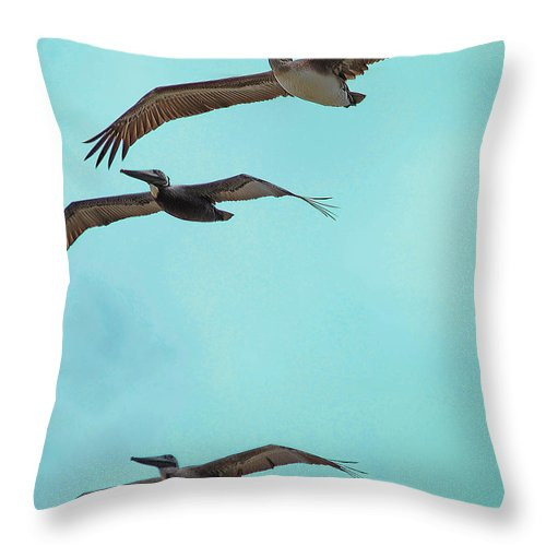 Pelican Throw Pillow featuring the digital art Pelican Trio by DigiArt Diaries by Vicky B Fuller