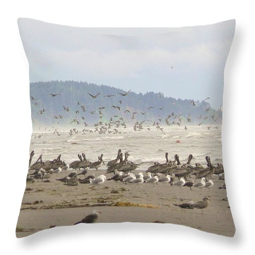 North Head Lighthouse Throw Pillow featuring the photograph Pelicans And Gulls by Pamela Patch