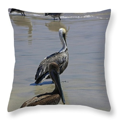 Pelican Throw Pillow featuring the photograph Pelicans Enjoying The Day At Playa Manzanillo by James Connor