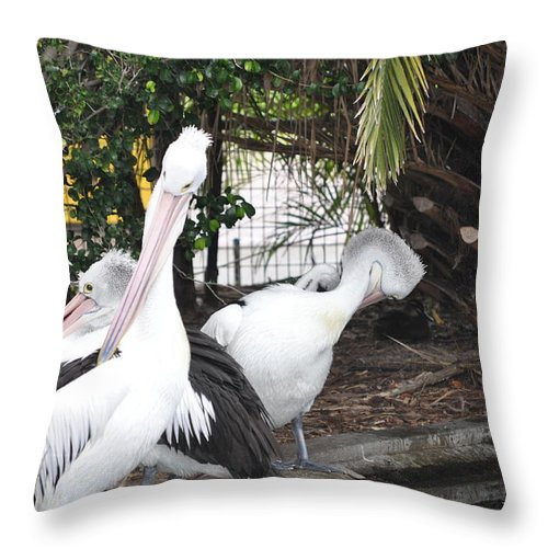 Birds Throw Pillow featuring the painting Pelicans by Richard Benson