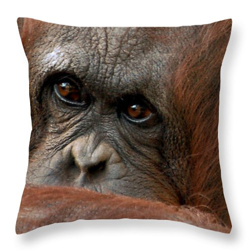 Primate Throw Pillow featuring the photograph Pensive by Donna Proctor