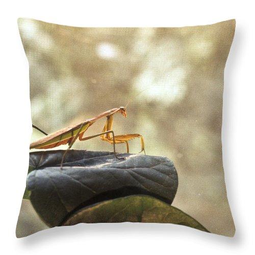 Praying Throw Pillow featuring the photograph Pensive Mantis by Douglas Barnett
