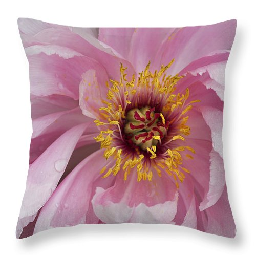 Flower Throw Pillow featuring the photograph Peonie In Pink by Deborah Benoit