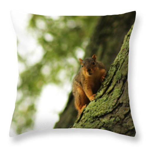 Squirrel Throw Pillow featuring the photograph People Watching by Briana La Trise