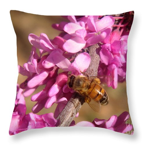 Nature Throw Pillow featuring the photograph Peppermint Candy Buzz Stop by Lucyna A M Green