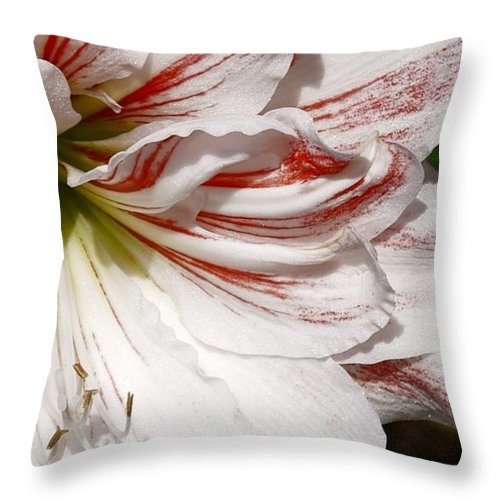 Peppermint Candy Lily Flower Throw Pillow featuring the photograph Peppermint Candy by Joanne Smoley