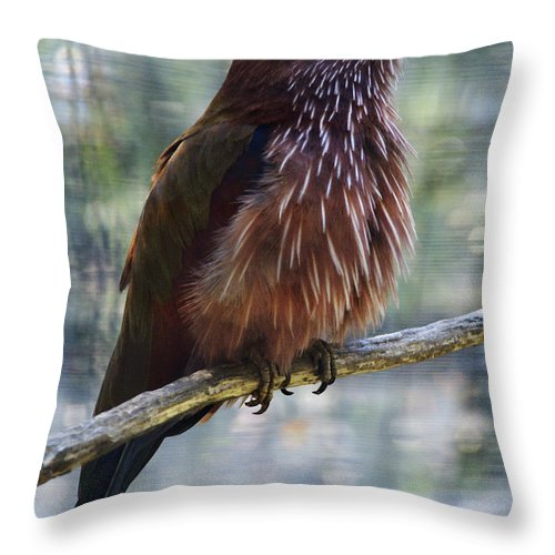 Bird Throw Pillow featuring the photograph Perched - 1 by Linda Shafer