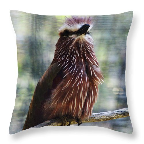 Bird Throw Pillow featuring the photograph Perched - 2 by Linda Shafer