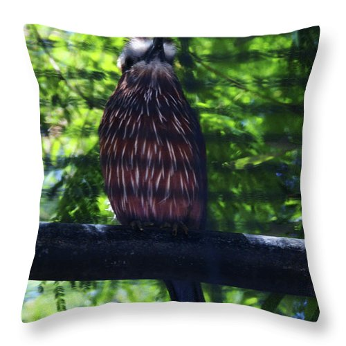 Bird Throw Pillow featuring the photograph Perched - 4 by Linda Shafer