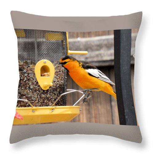 Bird Throw Pillow featuring the photograph Perched Oriole by Wendy Fox