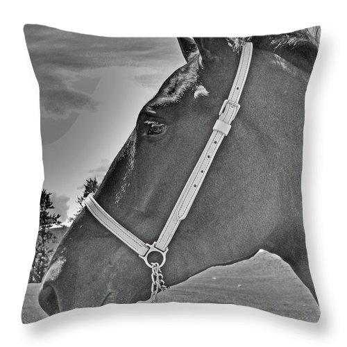 Al Bourassa Throw Pillow featuring the photograph Percheron Profile by Al Bourassa