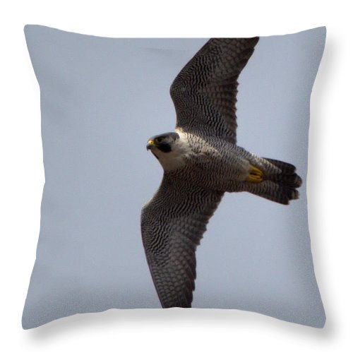 Falcon Throw Pillow featuring the photograph Peregrine Falcon IIi by Harry Moulton