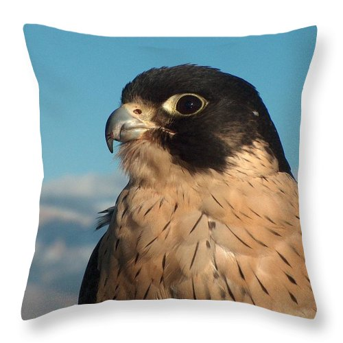 Peregrine Falcon Throw Pillow featuring the photograph Peregrine Falcon by Tim McCarthy