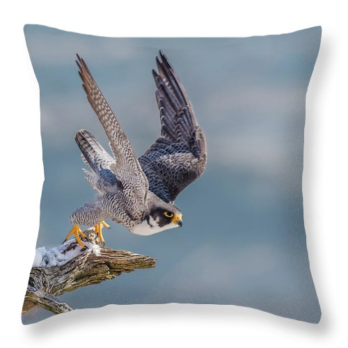 Peregrine On Your Mark Throw Pillow featuring the photograph Peregrine, On Your Mark by Morris Finkelstein