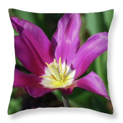 Tulip Throw Pillow featuring the photograph Perfect Single Dark Pink Tulip Flower Blossom Blooming by DejaVu Designs