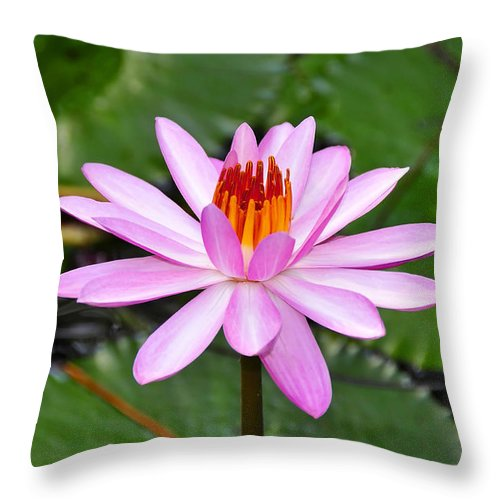 Flower Throw Pillow featuring the photograph Perfectly Pink by David Lee Thompson