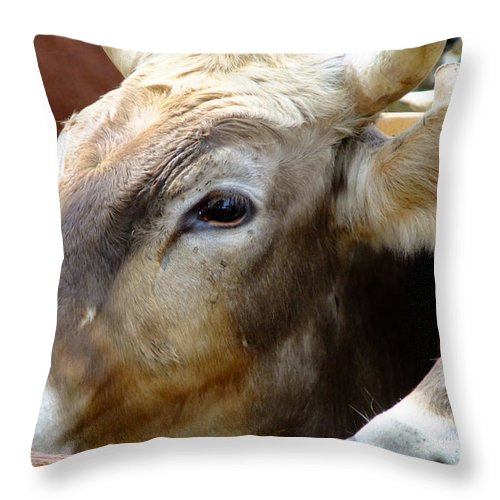 Animals Throw Pillow featuring the photograph Performance Anxiety by RC DeWinter