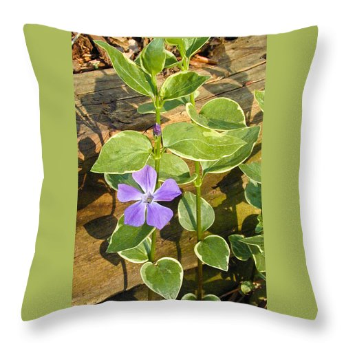 Periwinkle Throw Pillow featuring the photograph Periwinkle by Douglas Barnett