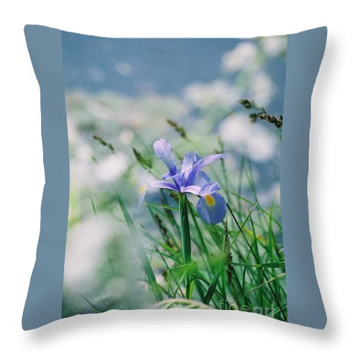 Periwinkle Throw Pillow featuring the photograph Periwinkle Iris by Nadine Rippelmeyer