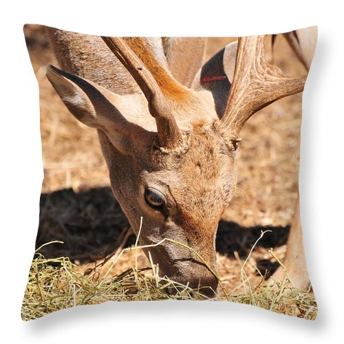 Fallow Deer Throw Pillow featuring the photograph Persian Fallow Deer by Shay Levy