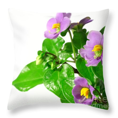 Closeup Throw Pillow featuring the photograph Persian Violets by Gaspar Avila