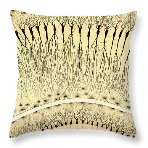 History Throw Pillow featuring the photograph Pes Hipocampi Major Santiago Ramon Y Cajal by Science Source