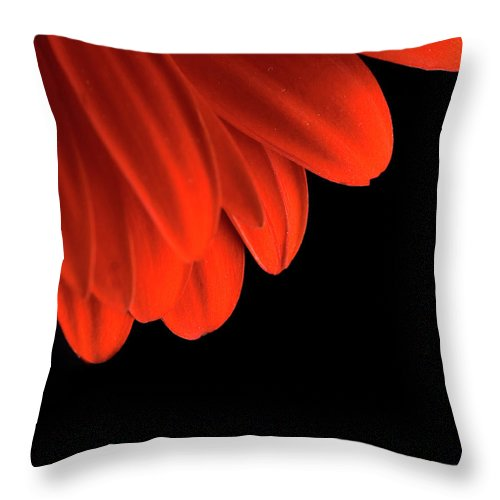 Flower Throw Pillow featuring the photograph Petals by Jessica Wakefield