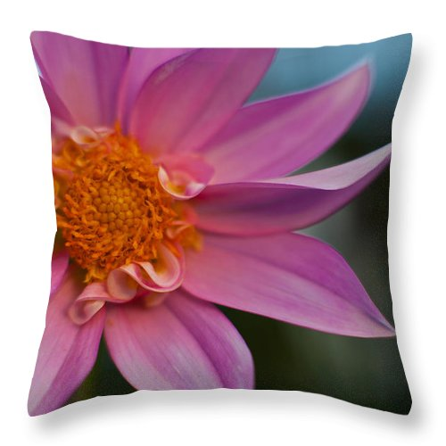 Dahlia Throw Pillow featuring the photograph Petals by Mike Reid