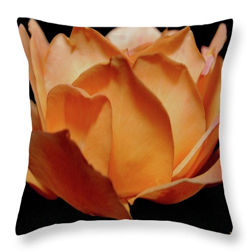 Rose Throw Pillow featuring the digital art Petals Of Orange Sorbet by DigiArt Diaries by Vicky B Fuller