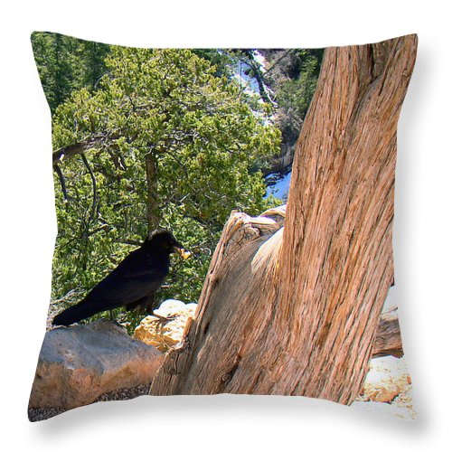 Grand Canyon Throw Pillow featuring the photograph Petrified Raven At Grand Canyon by Merja Waters