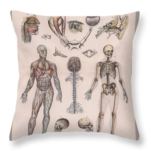 Physiology Diagrams Of The Human Body Throw Pillow For Sale By Victorian Engraver
