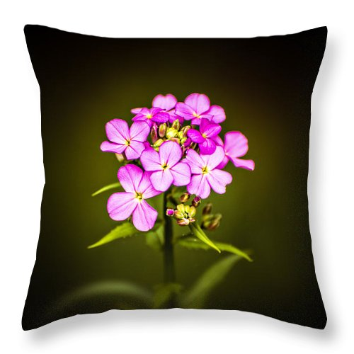 Pink Flower Throw Pillow featuring the photograph Pick Me Pinky by Joshua Zaring