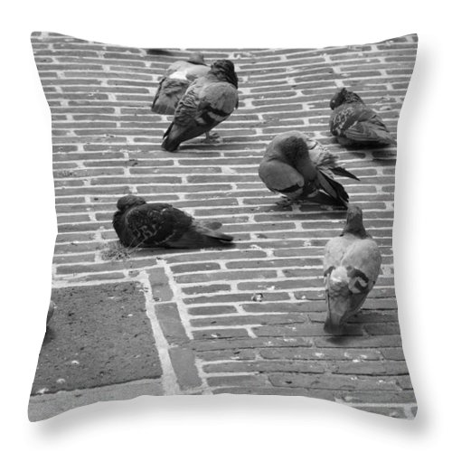 Birds Throw Pillow featuring the photograph Pigeons Of Amsterdam by Noah Cole