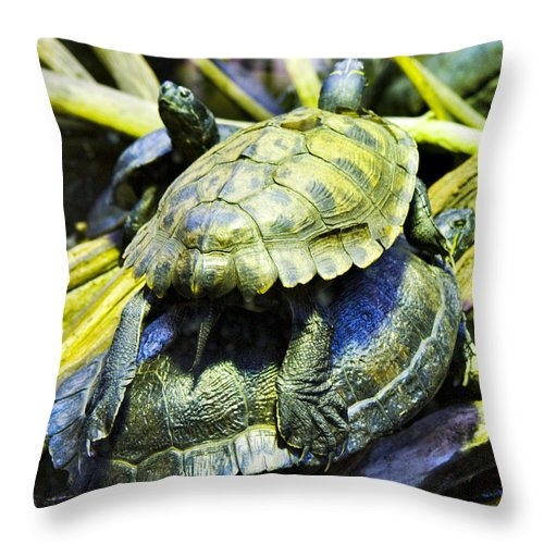 Turtles Throw Pillow featuring the photograph Piggy Back by Kat Besthorn