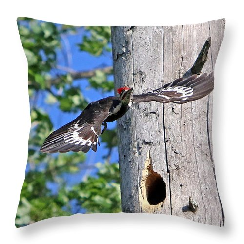 Woodpecker Throw Pillow featuring the photograph Pileated #27 by James F Towne