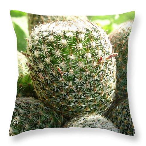 Cactus Throw Pillow featuring the photograph Pincushion Cactus by Susan Baker