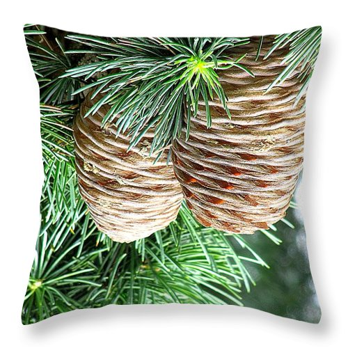 A Fall Picture Of Pine Cones Hanging In A Pine Tree! Throw Pillow featuring the photograph Pine Cones by Terri Behar