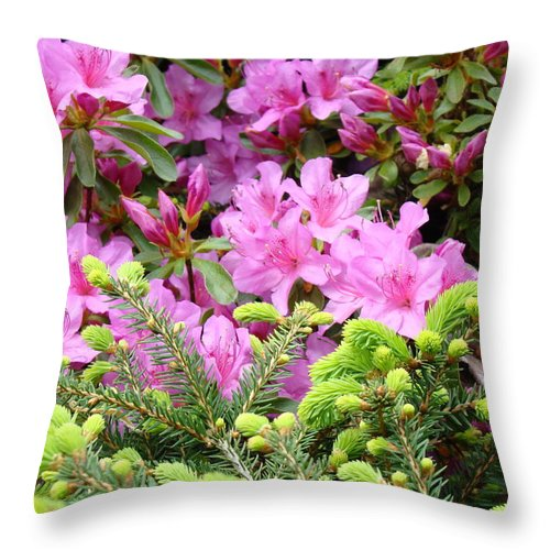 �azaleas Artwork� Throw Pillow featuring the photograph Pine Conifer Pink Azaleas 30 Summer Azalea Flowers Giclee Art Prints Baslee Troutman by Baslee Troutman