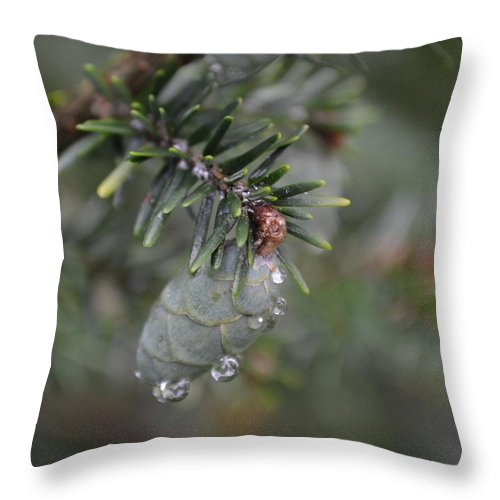 Pinecone Throw Pillow featuring the photograph Pine by Mary Zeman