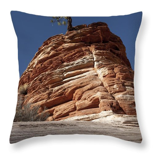Pinyon Pine Throw Pillow featuring the photograph Pine Tree On Sandstone by Sandra Bronstein