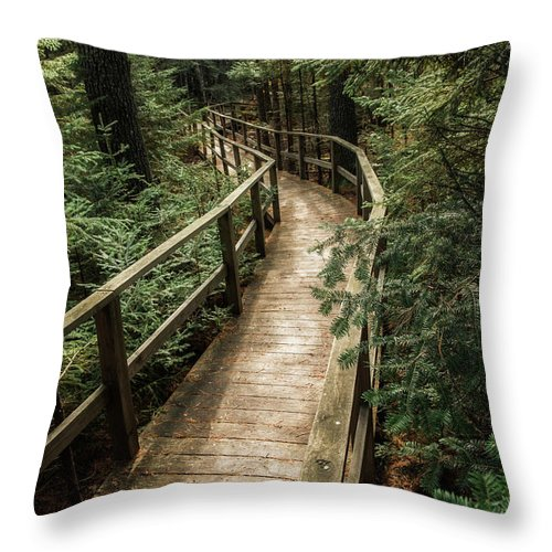 Pine Trees Throw Pillow featuring the photograph Pine Trees by Susan Garver