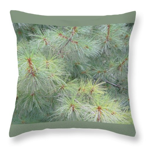 Pines Throw Pillow featuring the photograph Pines by Rhonda Barrett